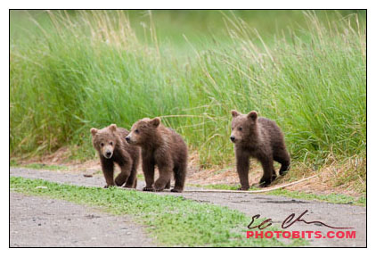 A Trio of Spring Cubs