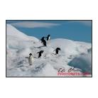 antarctica02_15636.jpg