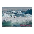 antarctica02_15963.jpg