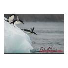 antarctica02_17436.jpg