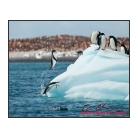 antarctica02_17496.jpg