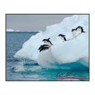 antarctica02_17611.jpg