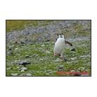 antarctica02_23315.jpg