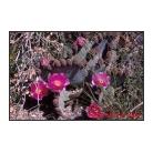 Cactus & Blooms