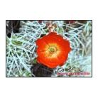 Brilliant Desert Bloom