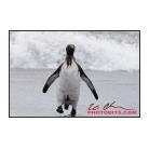 antarctica02_10805.jpg
