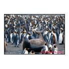antarctica02_12699.jpg