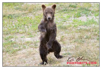 Dancing Spring Cub