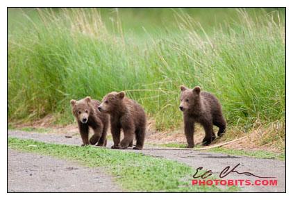 A Trio of Spring Cubs