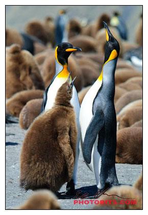 antarctica01-08157.jpg