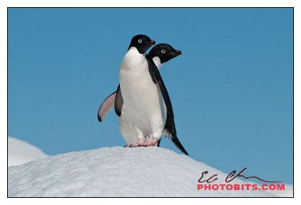 antarctica02-15653.jpg