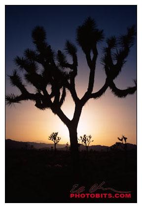Sunset & Silhouette