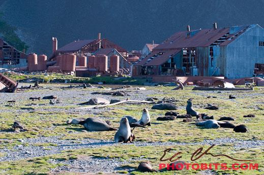 antarctica02_08919.jpg